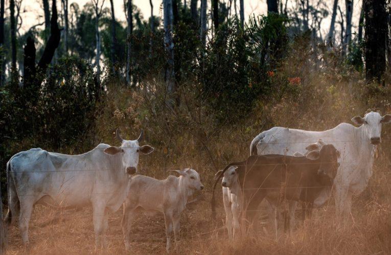 """""""L'allevamento illegale favorisce la distruzione della foresta amazzonica"""""""