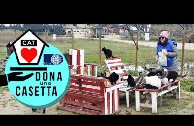 """Progetto OIPA """"Dona una casetta"""" per mici delle oasi feline"""