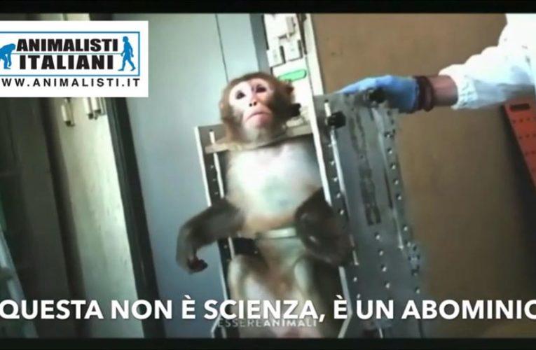Corteo a Parma contro l'accecamento dei macachi!
