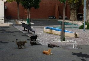 Gattile di Roma, Animalisti Italiani chiedono annullamento bando di gara
