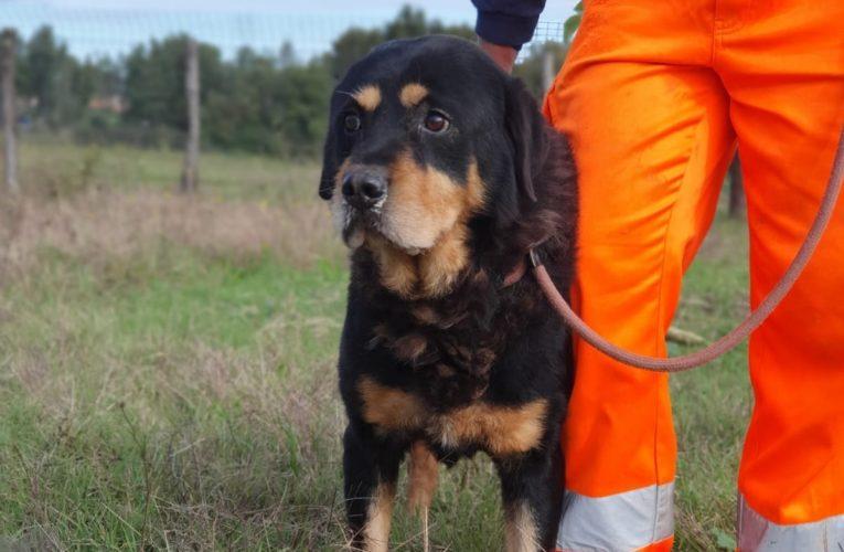 Il cane Tyson finalmente verso la libertà dopo 5 anni di isolamento