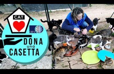 """""""Dona una casetta"""" ai gatti colpiti dal nubifragio in Toscana"""