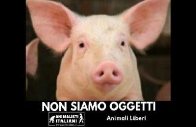 A Vallepietra (RM) è Medioevo: animali in palio nella lotteria di S. Antonio!