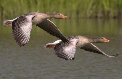 Tutela della biodiversità, pubblicate le nuove linee guida