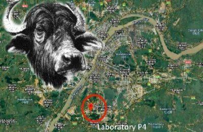 """La bufala del """"Coronavirus creato in laboratorio dai cinesi"""" arriva in Parlamento europeo"""
