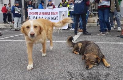 Cani avvelenati a Cervaro (FR), nel silenzio assordante di Istituzioni indifferenti