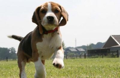Brescia, sentenza epocale. Assolti i 12 animalisti che liberarono beagle di Green Hill