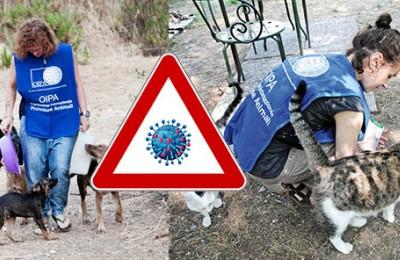 Coronavirus, consigli ai volontari che si occupano di animali