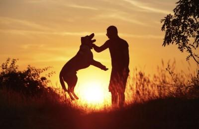 Covid-19, gli unici senza colpa sono gli animali