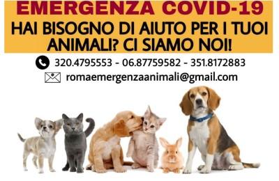 Roma, attivata una Task Force di volontari per le emergenze relative agli animali
