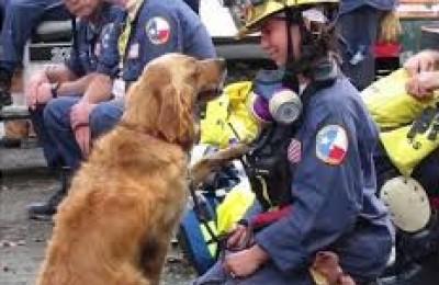 11 settembre. La storia di Bretagne, l'ultimo cane eroe