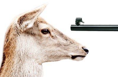 Riapertura della caccia, licenza di uccidere anticipata