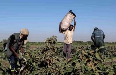 Il Covid-19 ha aggravato la condizioni di vita di 690 milioni di persone che già soffrivano la fame