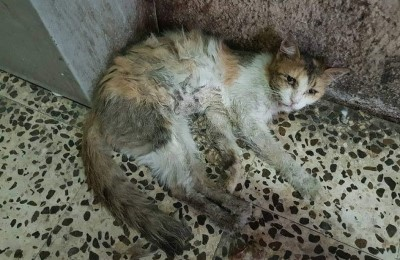 Dubai, cani e gatti randagi stanno morendo di fame e di sete