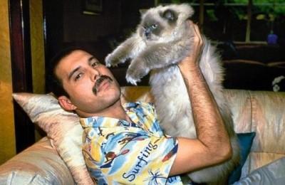 Freddie Mercury e i suoi amati gatti