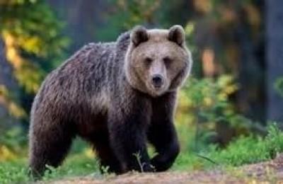 Cattura orso M49, delegata Oipa di Trento in sciopero della fame