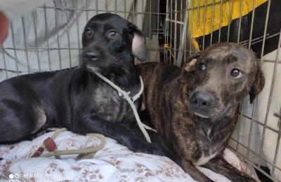 Comunicato Oipa su animali superstiti portati via dall'orrore in Valsamoggia