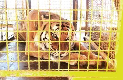 Francia: Stop ai circhi con animali selvatici e agli allevamenti visoni da pelliccia