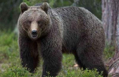 """""""Liberate l'orso M57!"""""""
