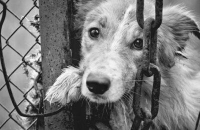"""""""Uomo prende a calci il suo cane, ma giudice glielo restituisce"""""""
