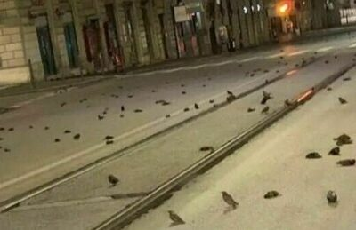 Il Capodanno 2021 fa strage di uccelli a Roma