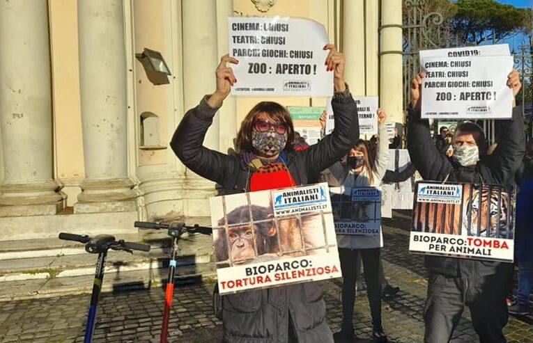 Zoo di Roma, la Sindaca Raggi fugge per paura degli animalisti