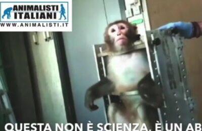 Sperimentazione sui macachi, protesta a Roma sabato 6 febbraio