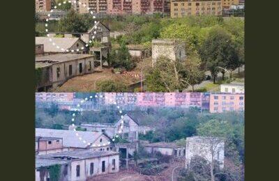 Giornata Mondiale della Terra, sradicato il Pino D'Aleppo casa di un gheppio