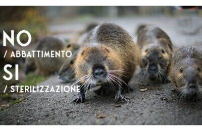 Ravenna, il Comune vuole uccidere una piccola colonia di nutrie